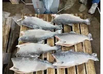 Cá Hồi Đông Lạnh Giá Rẻ Nhất Thị Trường Việt Nam
